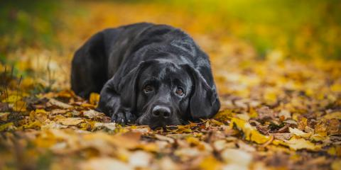 What Dog Owners Need to Know About Kennel Cough, Nicholasville, Kentucky