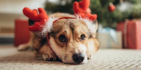 3 Foods to Keep Away From Pets This Holiday Season, High Point, North Carolina