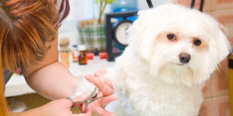 What to Expect From the First Pet Grooming Visit, High Point, North Carolina