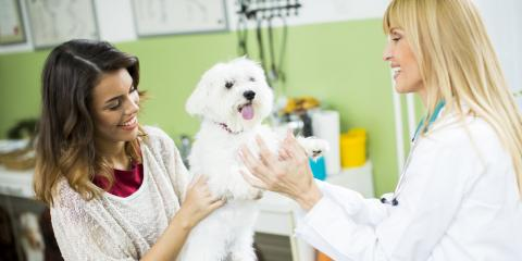 5 Significant Benefits of Spaying or Neutering Your Pet, High Point, North Carolina