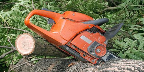 5 Benefits of Regular Tree Service, High Point, North Carolina