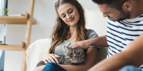 What Should I Do If My Cat Is Pregnant?, High Point, North Carolina