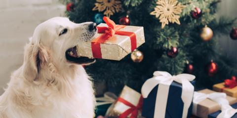3 Choking Hazards for Dogs During the Holidays, High Point, North Carolina