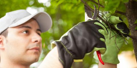 3 Late Summer Care & Maintenance Tips for Your Trees, High Point, North Carolina