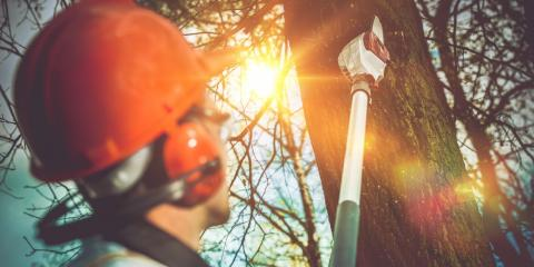Why You Need Professional Tree Removal Services—Not DIY, High Point, North Carolina
