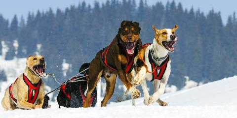 3 Essential Dog Grooming Tips for Inspecting Paws After a Winter Walk, Newport-Fort Thomas, Kentucky
