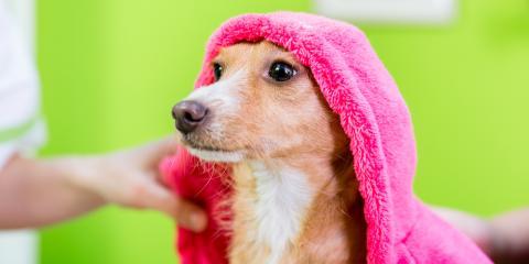 Dog Grooming 101: 5 Ways to Keep Your Pup's Skin & Coat Healthy, Newport-Fort Thomas, Kentucky