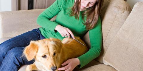 Tips for Managing Pet Fur Static, Newport-Fort Thomas, Kentucky