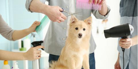 5 Surprising Health Benefits of Dog Grooming, Highland Village, Texas