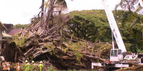 3 Reasons to Hire Professionals for Land Clearing Services, Hilo, Hawaii