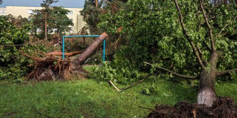 3 Reasons You Need Emergency Tree Service, Hilo, Hawaii