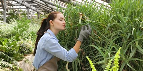 Plant Nursery Shares Care Tips for 5 Types of Ferns, Hilo, Hawaii
