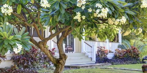 A Guide to Planting New Trees in Your Yard, Hilo, Hawaii