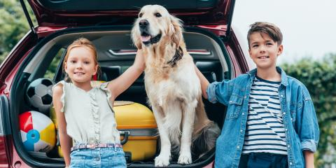 4 Tips for Driving With Pets, Hilo, Hawaii