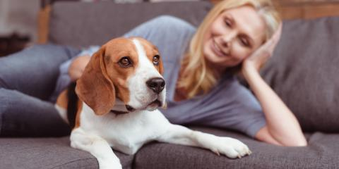 3 Reasons to Consider Spaying or Neutering Your Pet, Hilo, Hawaii