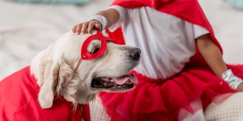 3 Halloween Pet Costume Safety Tips, Hilo, Hawaii