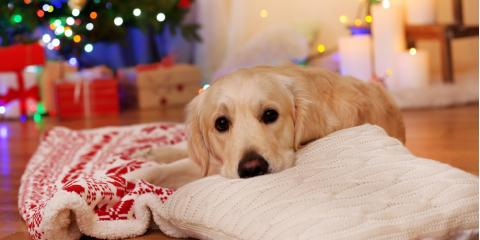 How to Keep Your Pet Healthy Over the Holidays, Hilton, New York
