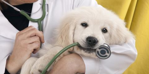 4 Times to Visit a Veterinary Clinic, Hilton, New York