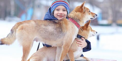 3 Pet Health Concerns to Look Out for This Winter , Hilton, New York