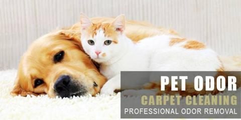 Reno Carpet Cleaning 3 Cleaners Nevada