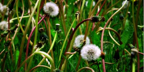 4 Weed Control Methods to Protect Your Yard, North Hobbs, New Mexico