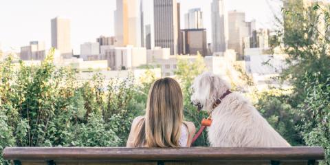 3 Reasons Pet Owners Love Living in Hoboken, Hoboken, New Jersey