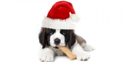 Port Orchard Veterinary Clinic Shares Tips For Keeping Your Pet Safe This Holiday Season, Port Orchard, Washington