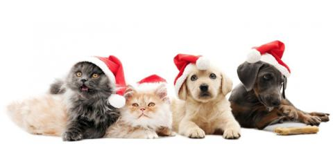 5 Common Holiday Plants That Are Toxic to Pets, From Waipahu's Best Veterinarian, Ewa, Hawaii