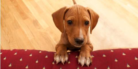 5 Floor Design Materials Pet Owners Should Consider, Holmen, Wisconsin