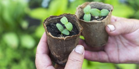 4 Sturdy Plants to Grow in Wisconsin, Nekoosa, Wisconsin