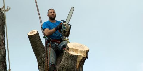 Dead Tree at Your Business? Call a Tree Removal Service ASAP, Lisbon, Connecticut