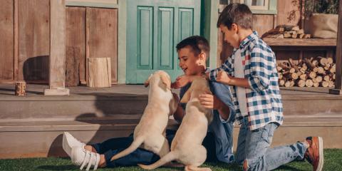 4 FAQ About HomeownersInsurance With Dogs, Mountain Grove, Missouri