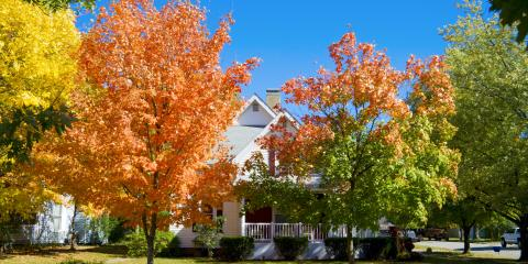 5 Tree Maintenance Tasks to Keep Your Home Safe, 1, Tennessee