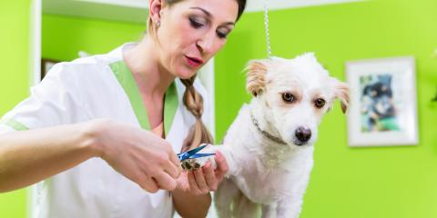 3 Tips to Reduce Stress Before a Dog Nail Trimming Session, Honolulu, Hawaii