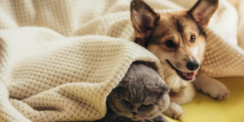 What Will Happen to Your Pets If You File for Bankruptcy?, Honolulu, Hawaii