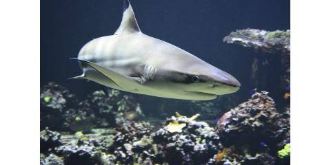 Shark Myths Busted: What Honolulu's Favorite Kayak Rental Shop Wants You to Know , Honolulu, Hawaii