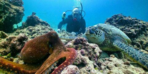 25% off Dive Tours From Oahu's Banzai Divers!, Honolulu, Hawaii