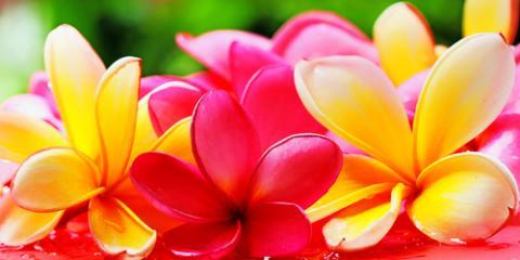 3 Tips for Preserving a Fresh Hawaiian Lei En Route, Hawaii County, Hawaii