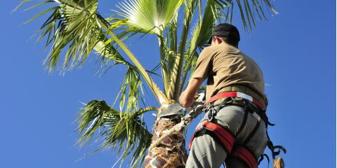 Top 3 Benefits of Professional Tree Trimming, Honolulu, Hawaii