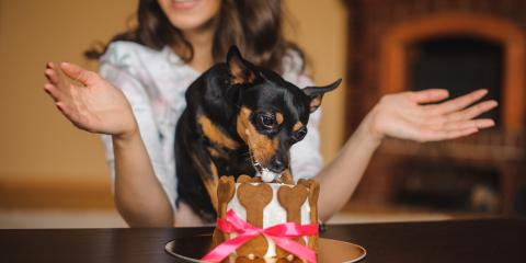 Top 3 Birthday Gifts Your Dog Will Love , Honolulu, Hawaii