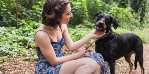 How to Properly Prepare Your Pet for Photo Shoots, Honolulu, Hawaii