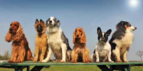 3 Ways to Prepare for Doggy Day Care, Honolulu, Hawaii