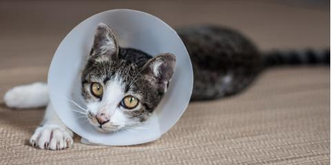 The Do's & Don'ts of Post-Surgery Pet Care, Honolulu, Hawaii