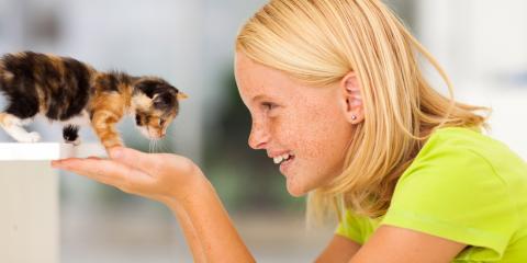 5 Helpful Tips for Socializing Your Pet Kitten, Honolulu, Hawaii