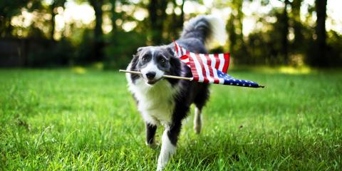 5 Safety & Pet Care Tips for Dog Owners on 4th of July, Honolulu, Hawaii