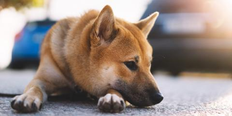How to Identify Depression in Dogs, Honolulu, Hawaii