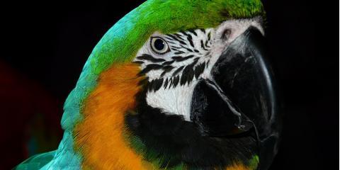 Honolulu's Experts Explain How Roudybush Bird Food Keeps Your Bird Healthy, Honolulu, Hawaii