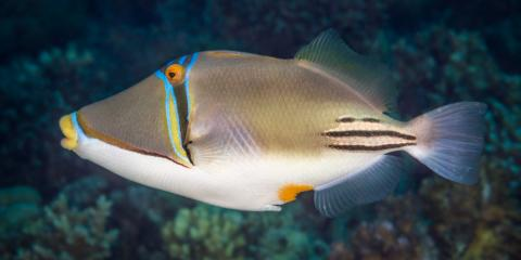 4 Captivating Creatures to Look for While Snorkeling in Hanauma Bay, Honolulu, Hawaii