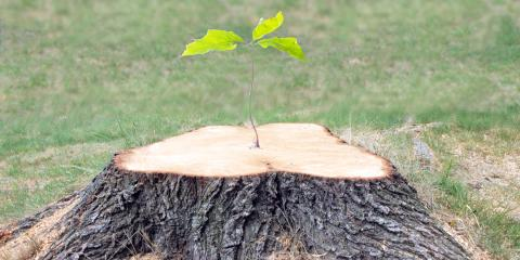 3 Reasons Why Stump Removal Is Beneficial, Honolulu, Hawaii