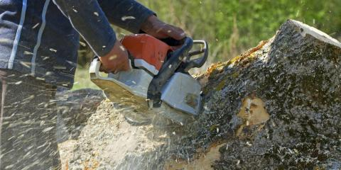 Stump Removal Experts Share 3 Ways to Remove a Tree Stump From Your Yard, Honolulu, Hawaii
